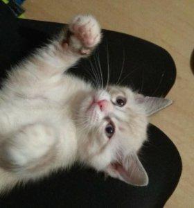 Срочно! Отдам котенка в хорошие руки