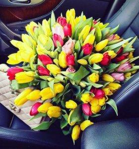Тюльпаны на 8 Марта опт и розница.