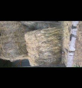 Продаётся сено луговое в рулонах
