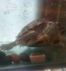 Черепаха + аквариум. Читать описание