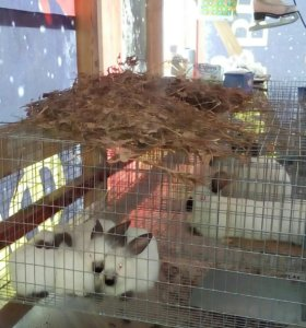 Кролики. Тушки кроликов.
