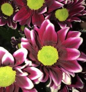 Магазин «Цветы!!!»
