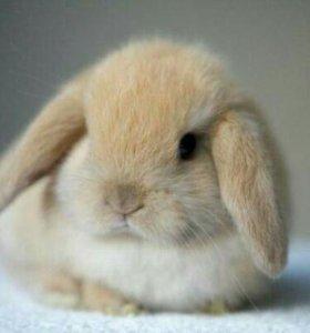 Декоративные кролики оптом по 400 р.
