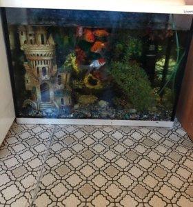Продам аквариум в комплекте даже с рыбками