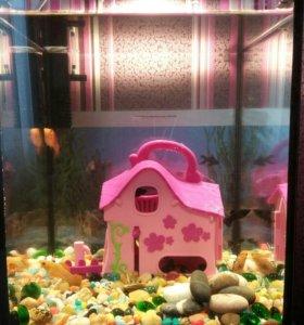 Рыбки малинези