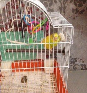 Попугай и клетка