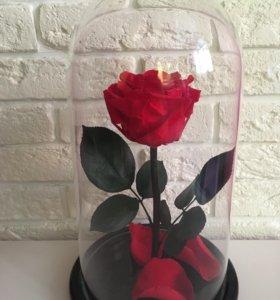 Живая Роза в колбе 🌹