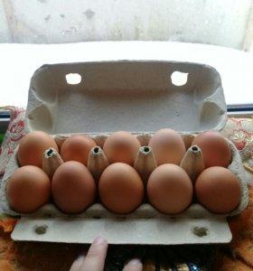 Яйцо куриное крупное