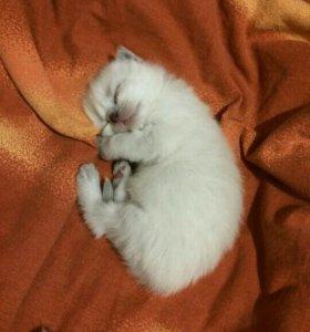 Передержка кошек и котят