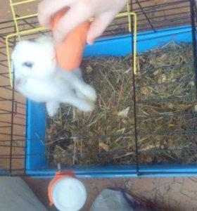 Кролик .