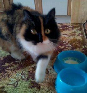 Молоденькая кошечка ищет хозяина