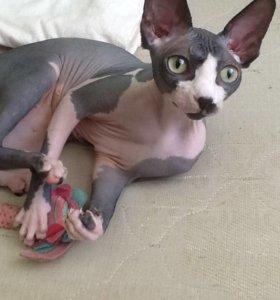 Кошка для случки