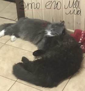 Пропал чёрный кот 🐱 описание ниже 👇🏻👇🏻👇🏻