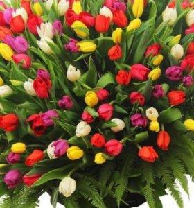 Тюльпаны к 8 марта! От 7 штук 50 р.