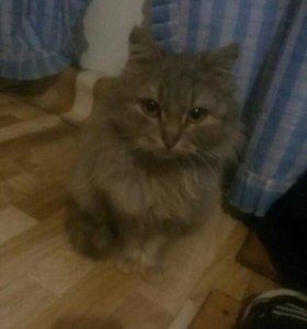 Кошечка стерелизованная)