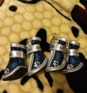 Ботиночки для маленькой собачки.