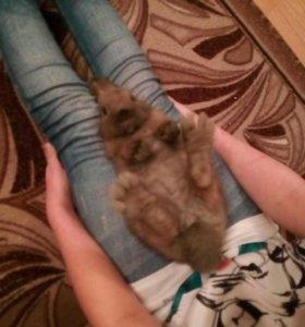 Кролик даром