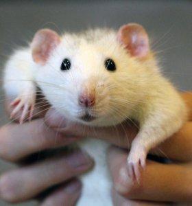Передержка, развод мелких животных