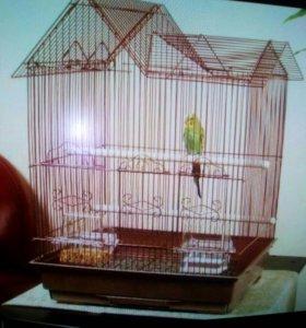 Куплю большую клетку для попугаев