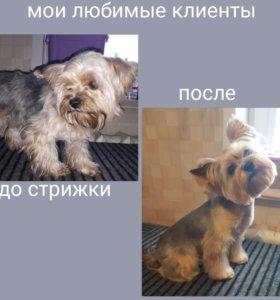 Стрижки собак мелких и средних пород