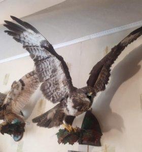 Чучела птиц РАСПРОДАЖА к 23 февраля