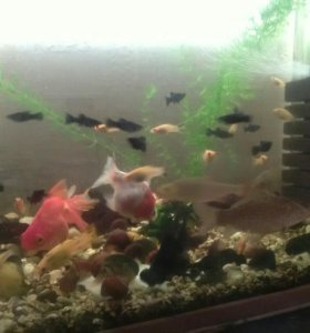 Рыбки,креветки,улитки