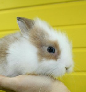 Крольчата мини.доставка,клетки