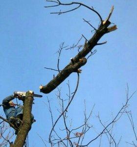 Пилим и опиливаем деревья