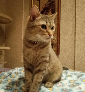 Кошка Ласка
