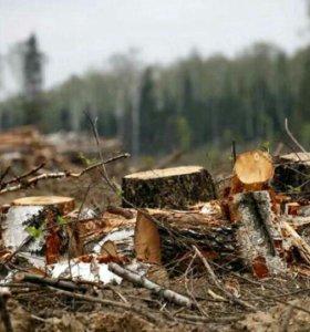 Удаление кустарника и мелких деревьев