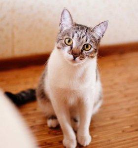 Кошка Лиза