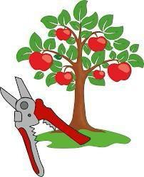 Профессиональная обрезка садовых деревьев
