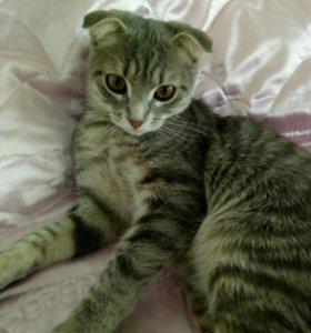 Отдам в добрые руки вислоухого котёнка