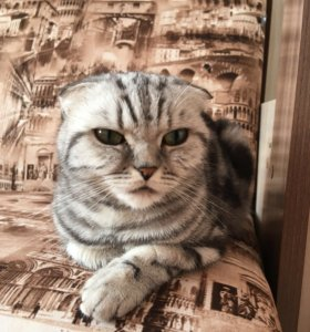 Милая Кошечка ждёт своего прЫнца!