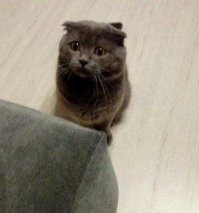 Кот для вязки