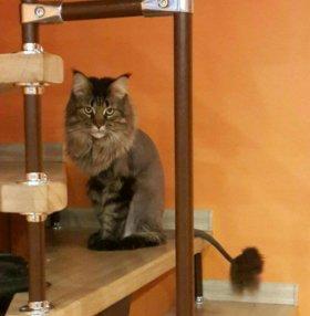 Стрижка котов и кошек с выездом на дом
