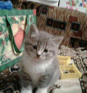 Котенок мальчик