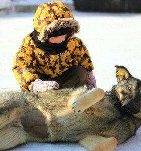 Собака в добрые руки (Девочка)