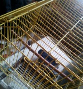 Клетка для волнистыx попугаев!
