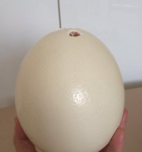 Яйцо динозавра)