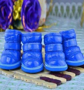 Сапожки обувь для маленькой собачки