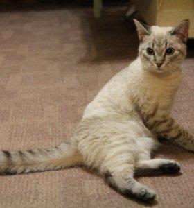 Найдена кошка в г.Кохма