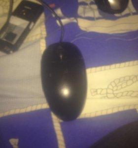 Мышка ирбис