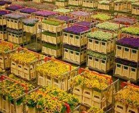 Купить цветы оптом