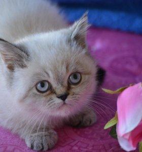 Чудесный котенок