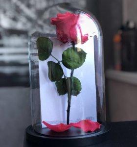Роза 🌹 в Колбе - скидка 25%