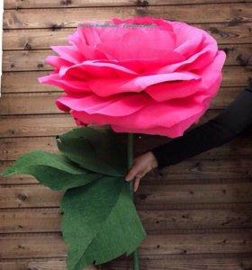 Ростовые (гигантские,большие) цветы для фотосессии