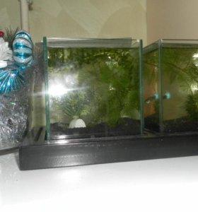 аквариумы дл мальков и бойцовских