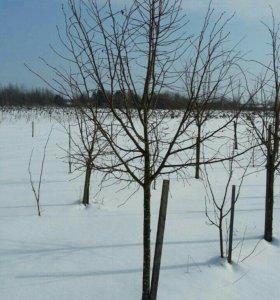 Крупномеры лиственных деревьев