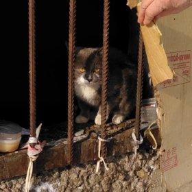 Котик в дар